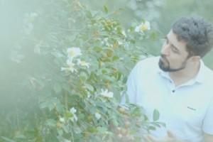 宁德九展致力于将绿色野生油茶推向世界